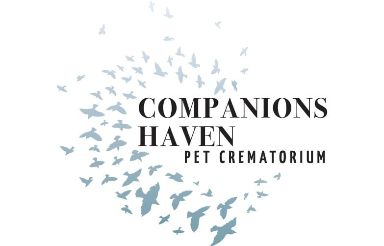 Business Stationery Design Plymouth - Companions Haven Back - Web Design and SEO Company