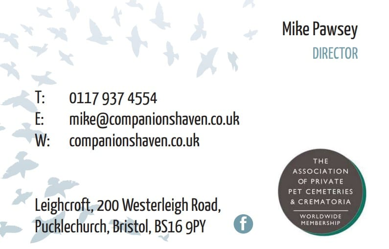 Business Stationery Design Plymouth - Companions Haven Front - Web Design and SEO Company